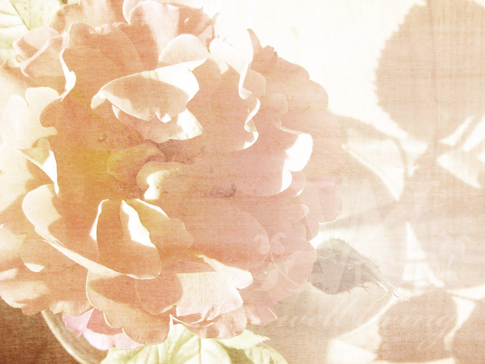 http://3.bp.blogspot.com/_vGuBhXbtgU8/S-SX8qpW0TI/AAAAAAAAAWA/azHH2TQhBvE/s1600/wallpaper_vintagerose.jpg