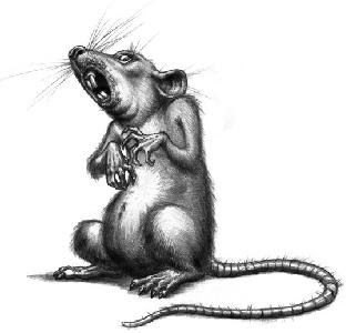 Benarkah Seekor Tikus Dapat Mengendus Lokasi Ranjau Darat?