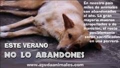 NO!!! AL ABANDONO DE ANIMALES!!!