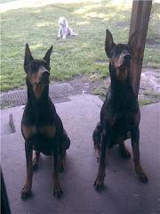 Simona, Tyson y mi Bengi al fondo (Noviembre 2008)
