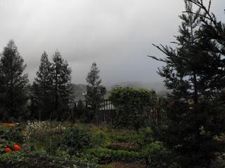 rain place