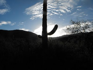 sunrise cactus on the desert, TUCSON
