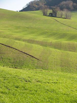 Campo di grano nei pressi di Collina di Civitella