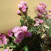 Flores de nosso jardim
