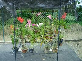 Pondok Orkid