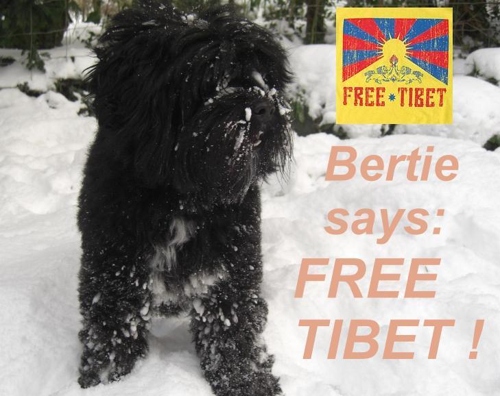 Bertie Says Free Tibet !