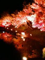 鏡池に映った紅葉