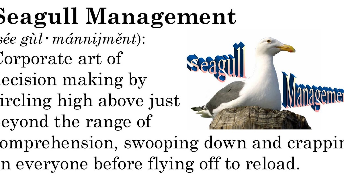 Work Redefined Seagull Management