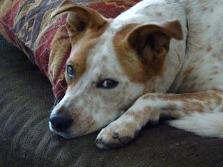 Image Result For Dog Whisperer Leash