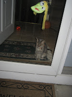 Gabby checking out the trick-or-treaters
