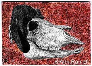 The Last Musk Ox - scratchboard (and color pencil) ACEO by Ann Ranlett