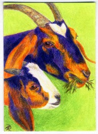 Gimme Some - color pencil ACEO by Ann Ranlett