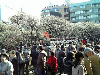 ume garden in yushima tenjin