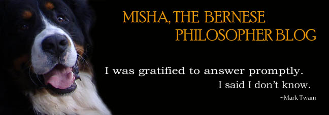 Misha, the Bernese Philosopher Blog