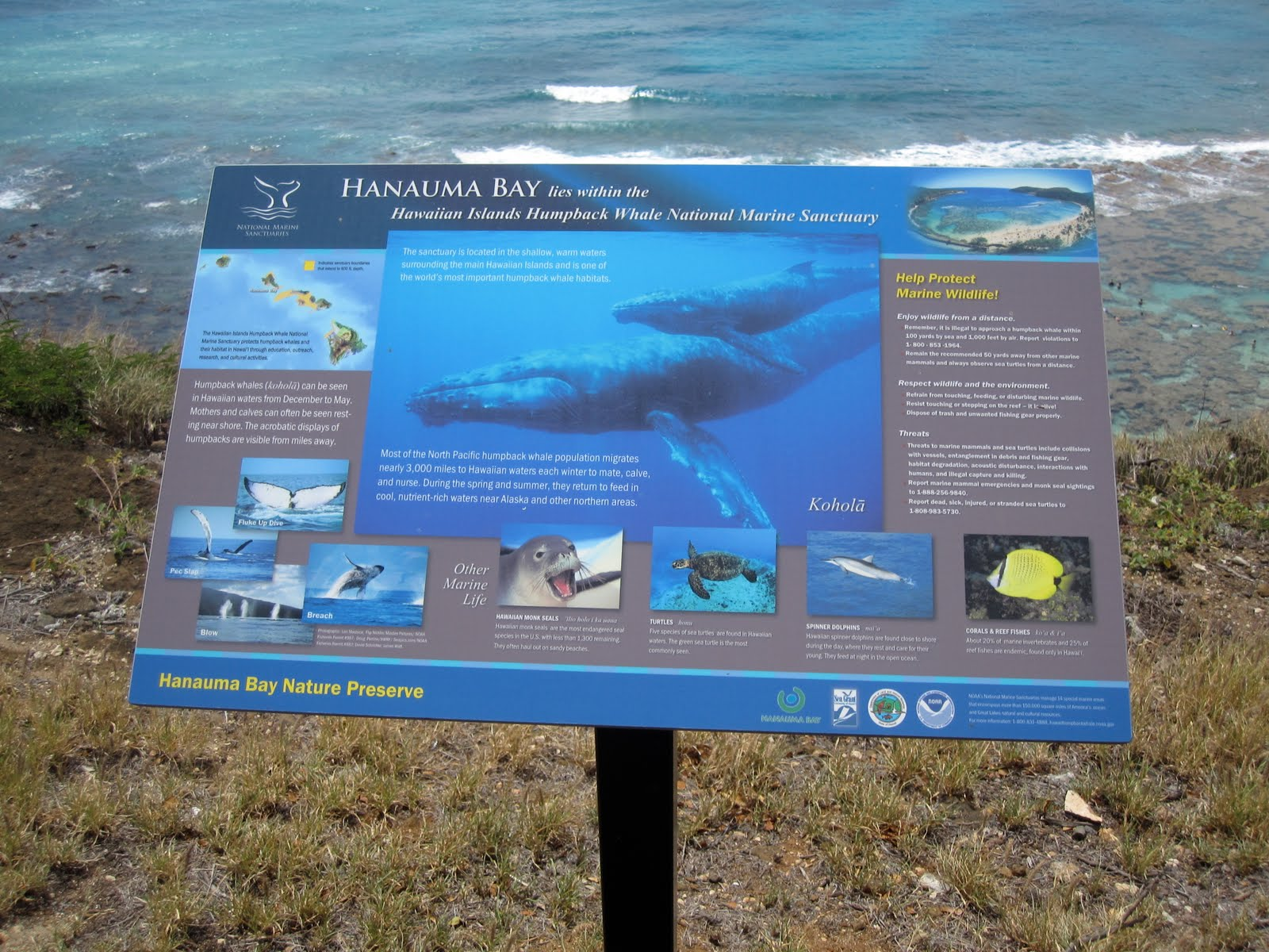 swimming with the fishes at hanauma bay nature preserve