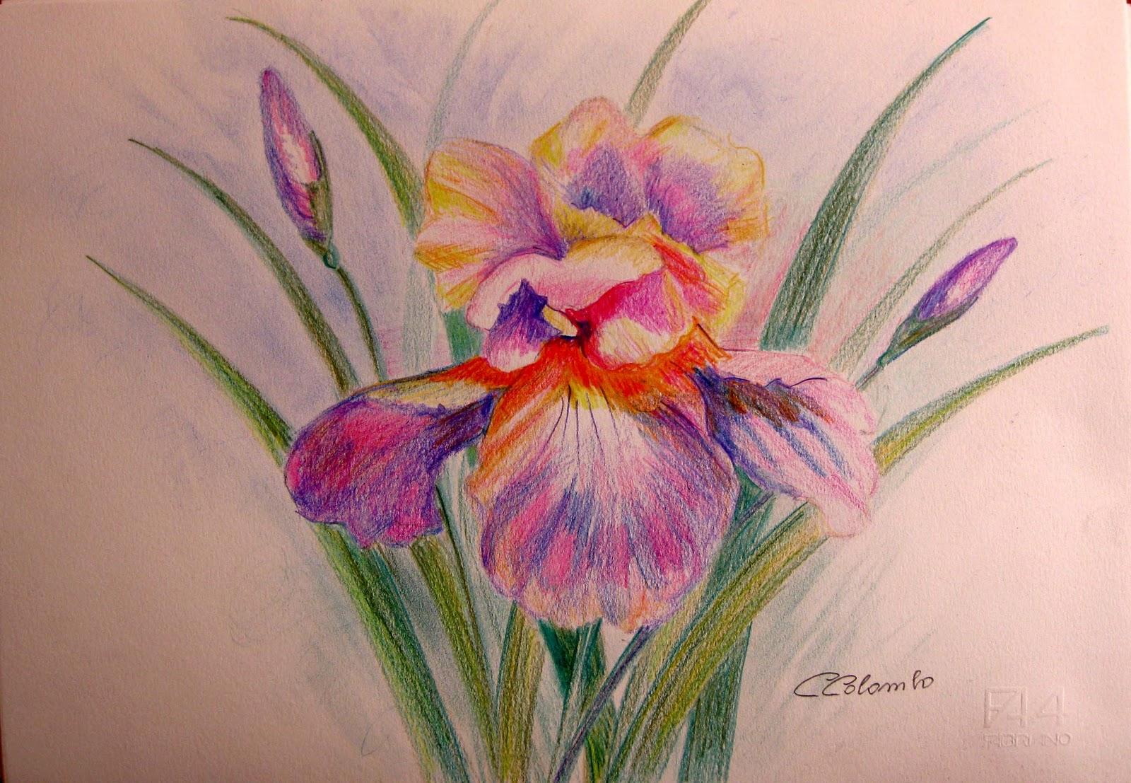 Rosa disegno a matita colorato for Disegni di fiori a matita