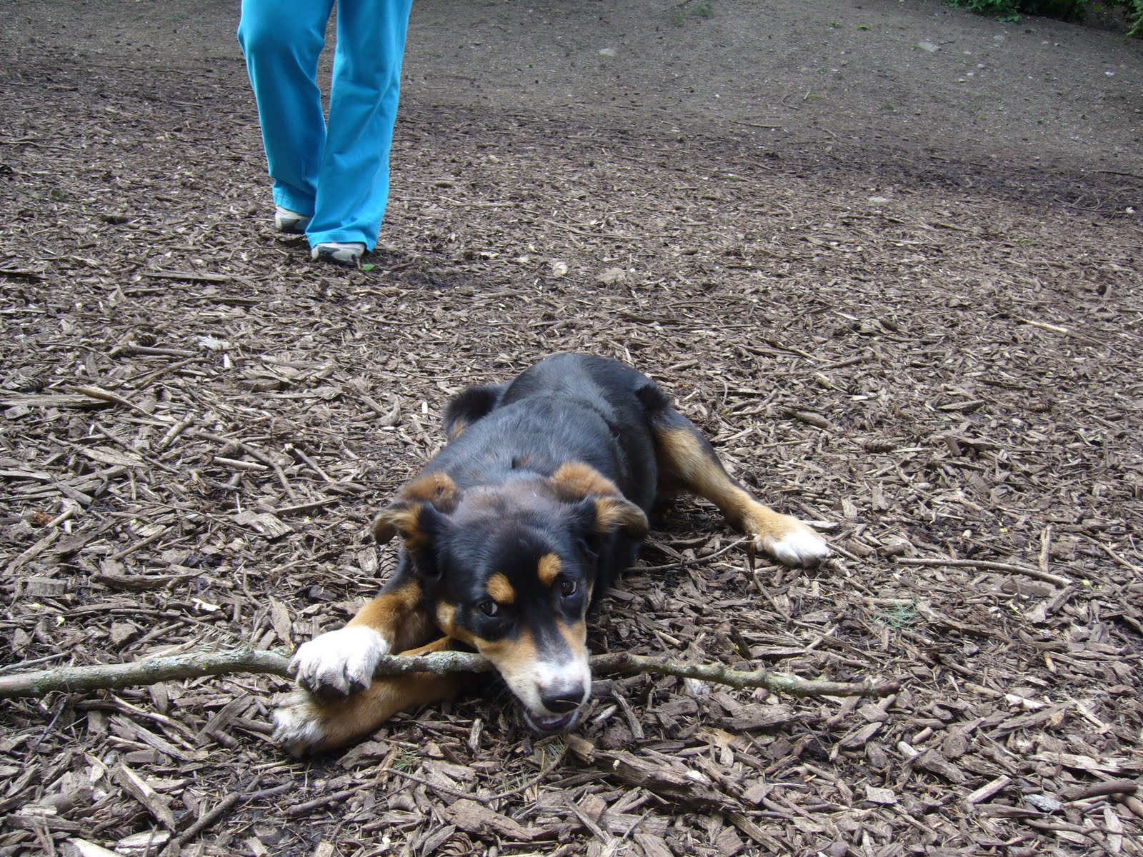 Madison Off Leash Dog Park
