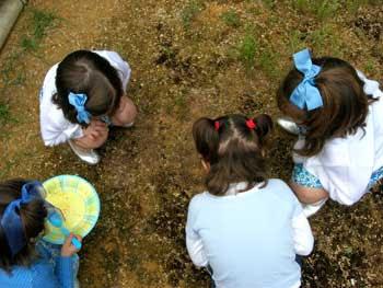 Larga conversación sobre hacia donde iban las hormigas