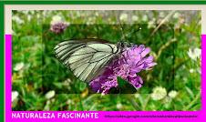 NATURALEZA FASCINANTE