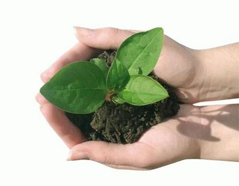 Fertilizantes sabias que for Un fertilizzante