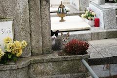 """""""Colónia do Cemitério de Agramonte, Boavista, Porto"""