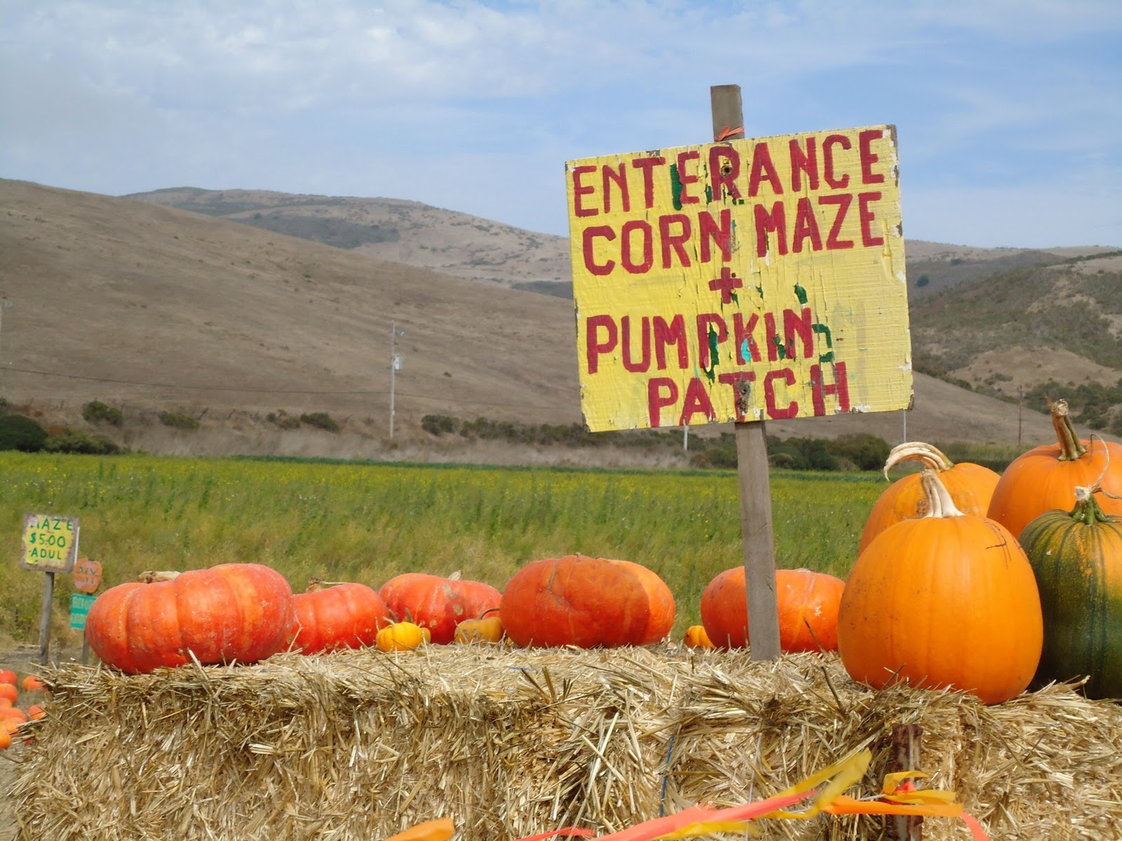 Alice S Travel Adventures Muzzi S Ranch Pumpkin Patch And