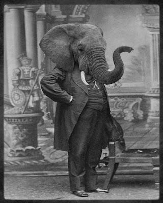 Elefánt fejű ember