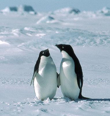 http://3.bp.blogspot.com/_v_8aD06jH6I/TBi-ijkmqrI/AAAAAAAAAHY/PgBnap0UpjY/s1600/South-Pole.jpg