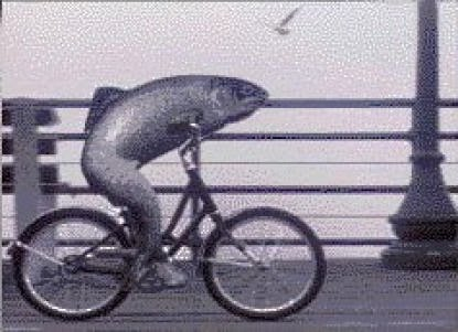 a_fish_needs_a_bicycle.jpg (415×301)