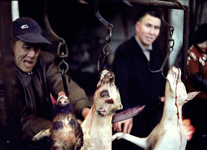 chien du Hunan