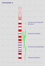 cromosoma 15