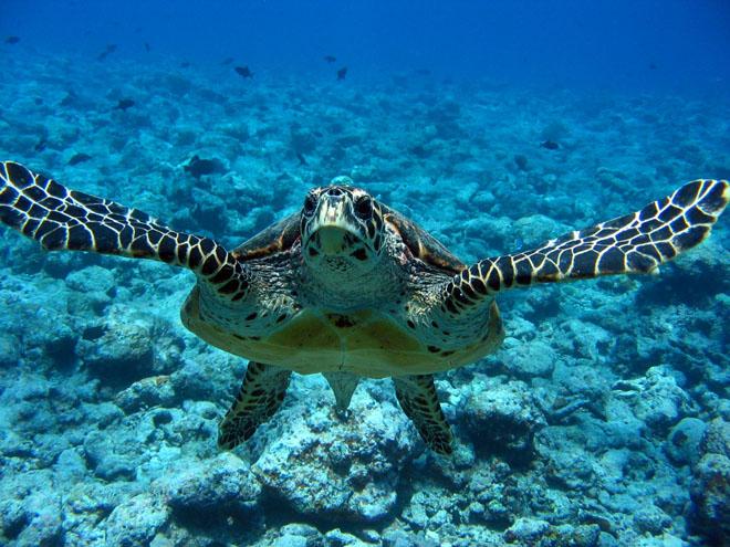 Adapta es aqu ticas tartarugas for Tartaruga da acquario