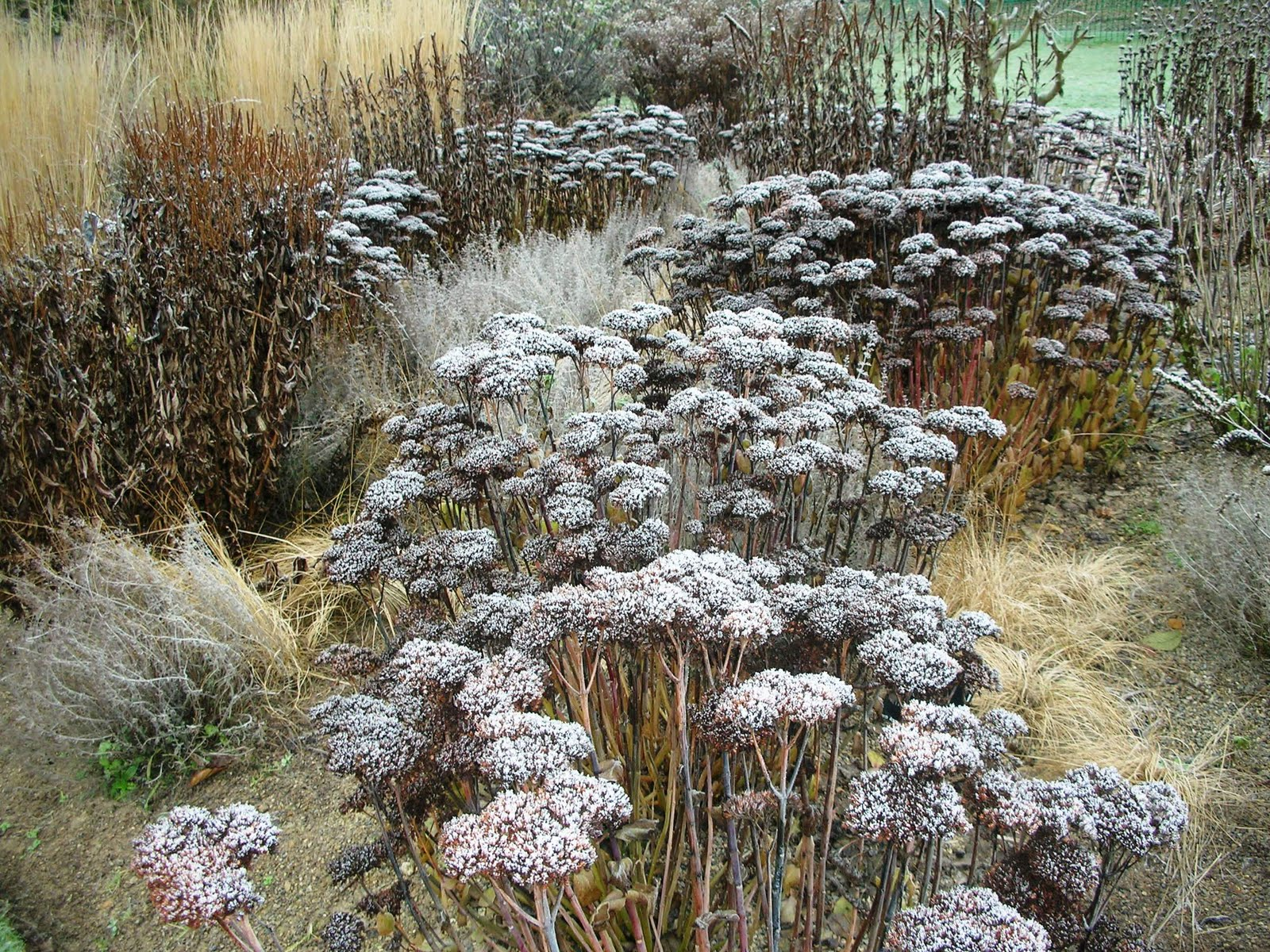 eggplant aubergine pot stew and beautiful winter frost at wisley