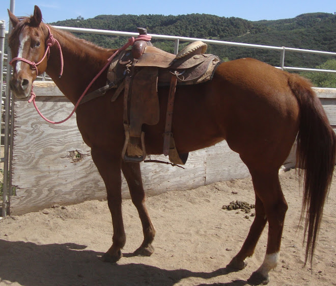 Blaze, 19 yr old registered paint mare for adoption