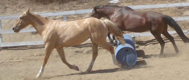 Taffy and Valor exercising today