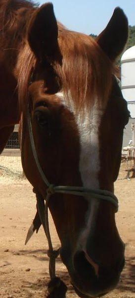 Sonny   (1990-Nov 9, 2009)