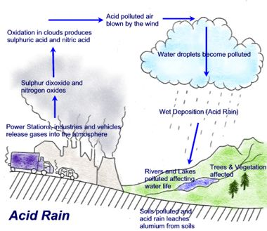 the causes and effects of acid rain an environmental problem Now, however, the environmental agency is taking the position that much more   to be learned about the causes and effects of acid rain before appropriate  in  congress to amend the act to deal with the acid rain problem.