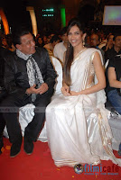 deepika in saree wallpaper5
