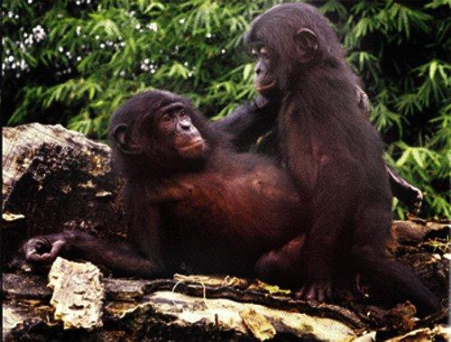 http://3.bp.blogspot.com/_vc1VEWPuSmU/SNi9hj5yj3I/AAAAAAAADV0/ONAqcYhM6WA/s1600/bonobo.jpg