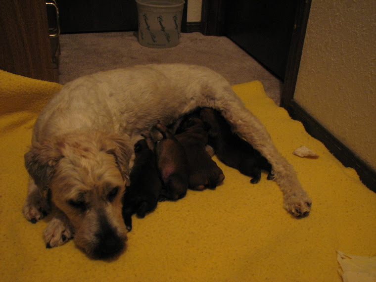 Stella with babies