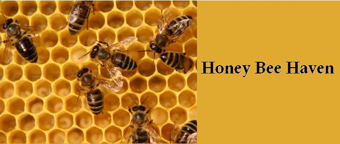 Honey Bee Haven
