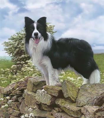 Las diez razas de perros mas inteligentes y peligrosas