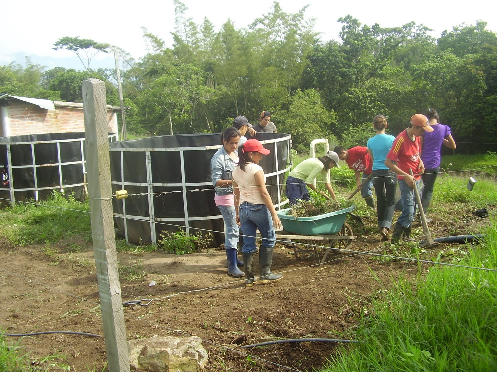Jovenes rurales emprendedores consideraciones generales for Proyecto de piscicultura mojarra roja