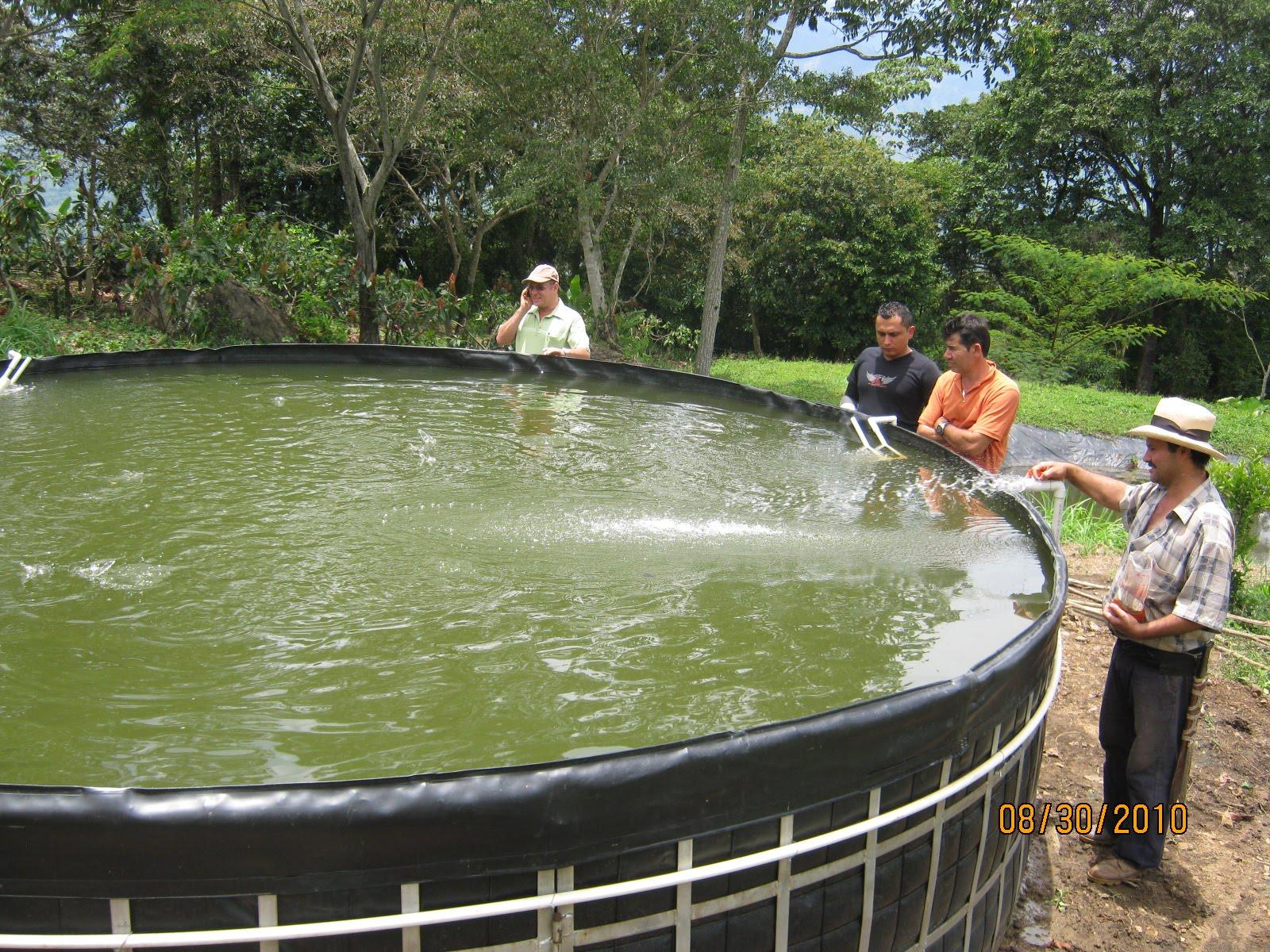 Jovenes rurales emprendedores septiembre 2010 for Estanques de tilapia