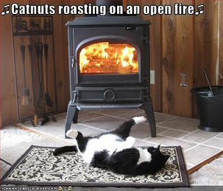 Image result for cold caturday images