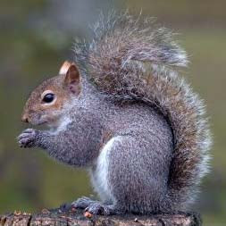 Of course, I'd really love to try red squirrel, but there are only 5 ...