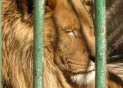 υπογραφές ενάντια στα τσίρκο με ζώα