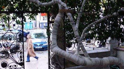 árbol con paseante