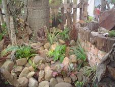 Pedras e plantas