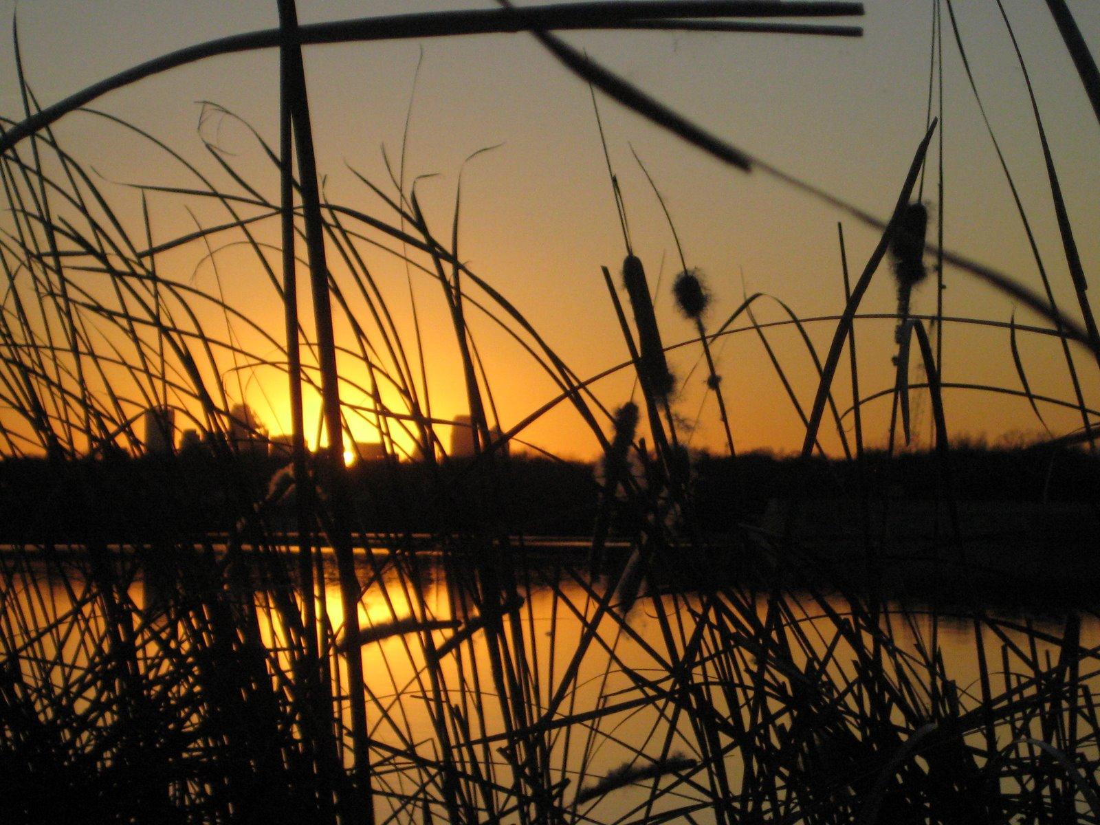 [Cattail+Sunset1.JPG]